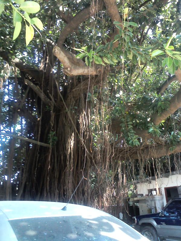 Boca La Caja 3