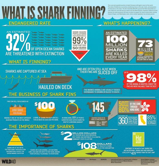 shark-finning_50290cffe6440