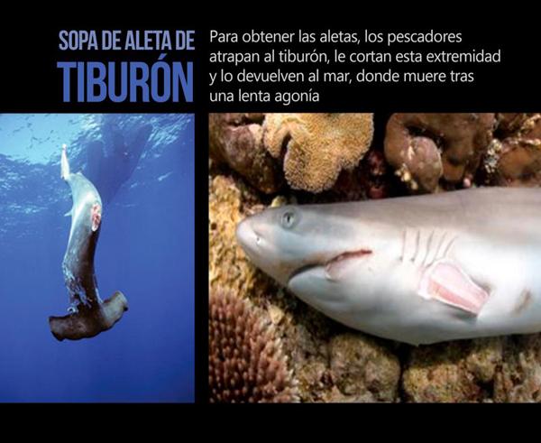 sopa-de-aleta-de-tiburon